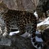 5 животных, находящихся на грани вымирания