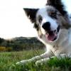 Самые умные породы собак – рейтинг ТОП-10 лучших