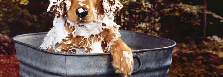 Зеленый органический шампунь для собак