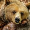 5 самых опасных животных России: куда ходить не нужно