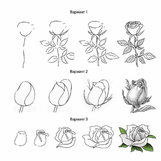 Как нарисовать бутон розы карандашом поэтапно?