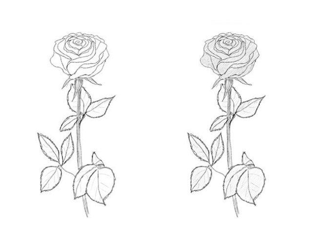 Рисуем красивую розу с длинным стеблем