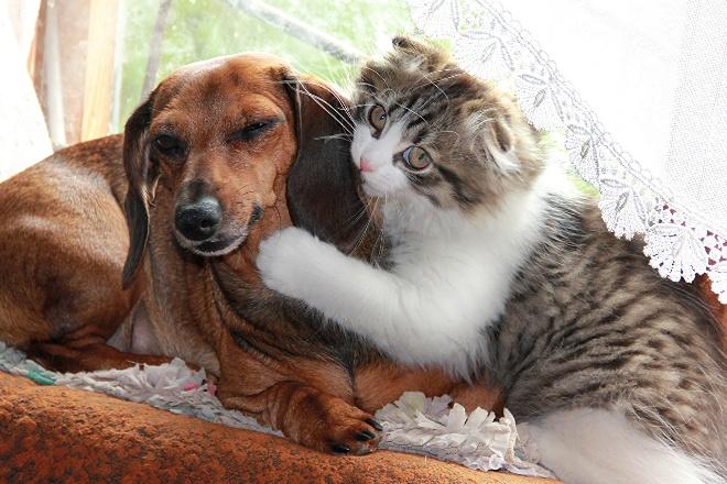 Какое домашнее животное лучше завести
