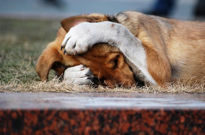 Ваши собаки никогда вас не смущали?