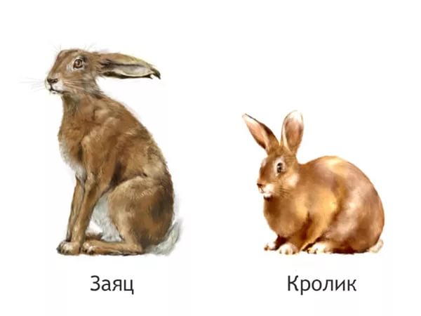Картинки по запросу кролик и заяц
