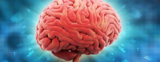 ТОП-10 интересных фактов о мозге