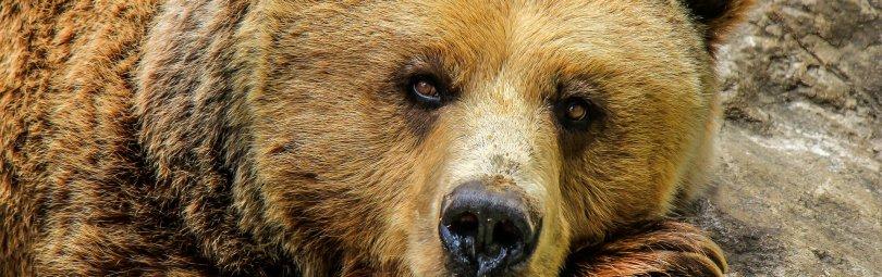 bear-838688_1920_crm